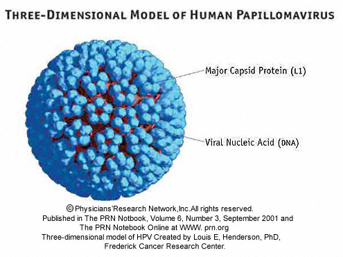 Hpv vaccine for non sexually active